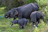 Sri Lanka: 2002 - 2006