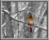 Female Cardinal ~ 2003