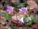 Flowers & Bee Fly