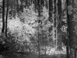 Forest-copy.jpg