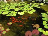 Aug16_2002fish