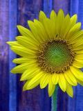 Flora: flowers, fruit