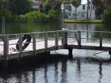 Dock Reflected wb.jpg