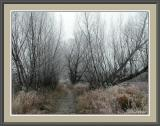 Freezing Mist
