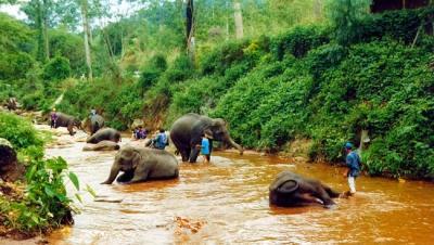 Baño de Elefantes