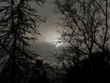 Foggy Sun in Trees