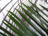 Contrasting lines, Kew Gardens, London