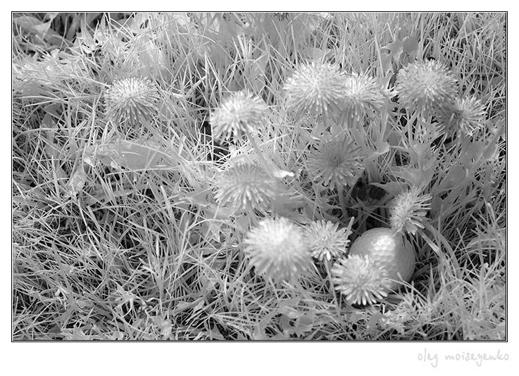 Dandelions & golf ball