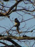 squirrel twig.jpg