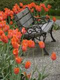 Surrounded Bench