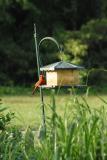 532 cardinal at far feeder (crop)