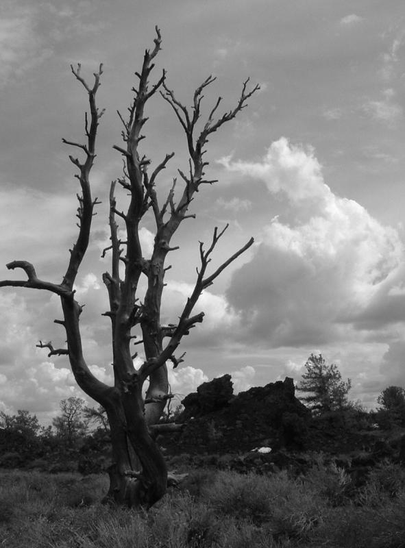 Crater tree