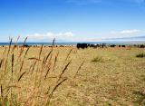 Qinghai Lake¡i«C®ü´ò¡j