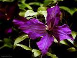 Color Of Purple Rain