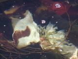 Hereford kelp?