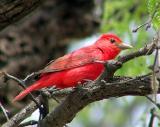 Favorite Bird Images (Pro90)