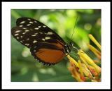 e10_butterflies
