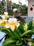 Dougal with orchid