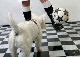 March 29, 2005 - Soccer dog