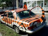 Tiger in your TankKey West, FLby Loren Charif