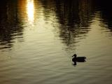 Solo Swim             by Michael Buckman