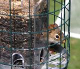 My Squirrel proof bird feeder!