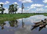 Agusan Marsh