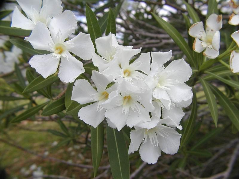 Flowers 052.JPG
