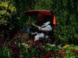 Reading in the gardens.jpg