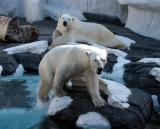 Polar bear - Taken at Seaworld, San Diego, 2002