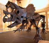 Dinosaur - LA Museum of Natural History - CP5k