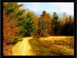 Spring Comes to My Ski Trail