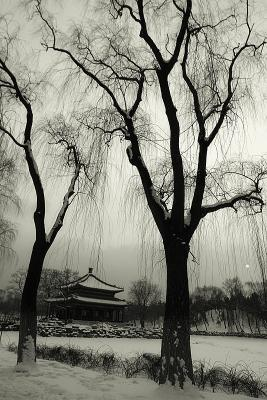 Sad Winter Afternoon, Beijiing, China, 2004