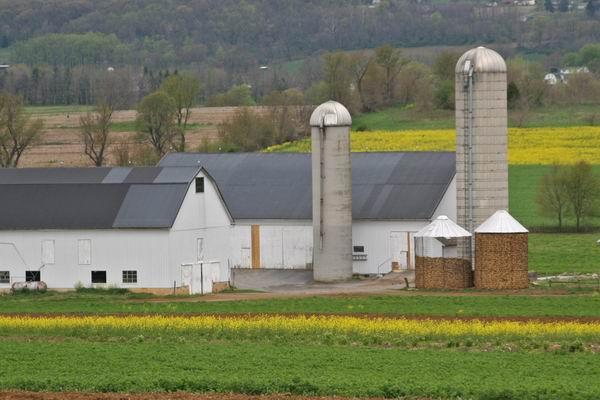 Amish 079.jpg