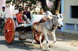 Cart in Gwalior