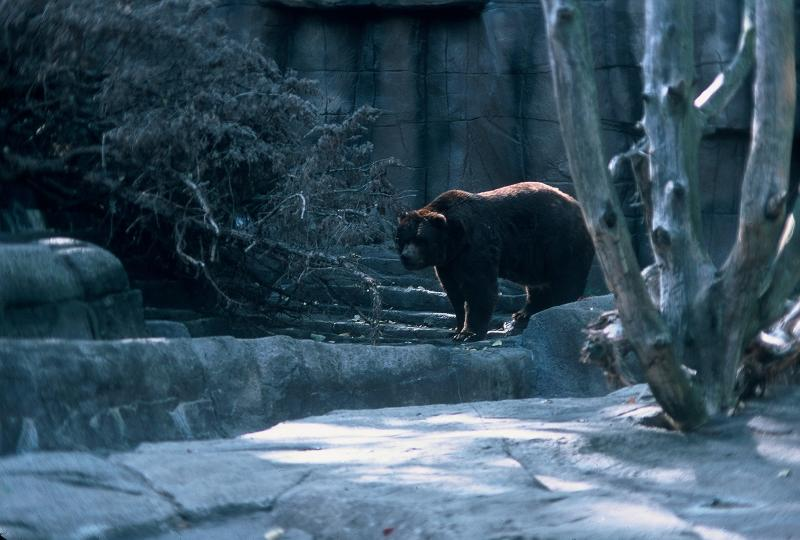 Bear at Indianapolis zoo