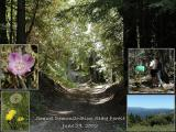 062902_soquel_demo_st_forest