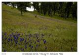 Field of Larkspur and Owl's Clover
