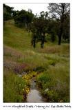 Blossoms along Kingbird Creek