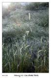 Grass in morning lite