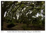 Ancient Oaks and Natural Spring