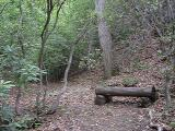 meditation spot north of shed along stream bed