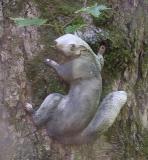 Lynn's squirrel