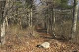 Early December Hagemann Woods
