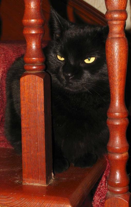 Jasper on the stairs