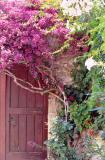 DoorwayFlowers