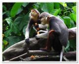 Singapore Zoo Gallery