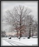Snowy Saved Tree