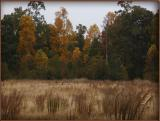 Fall Peek