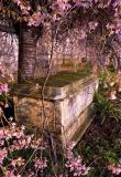 Spring Coffin